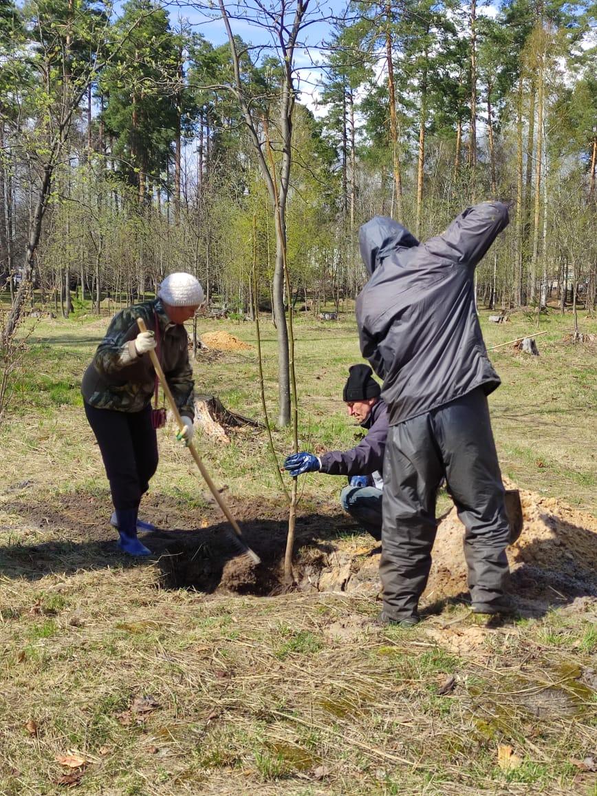 Житель Выксы подарил парку саженцы грецкого ореха