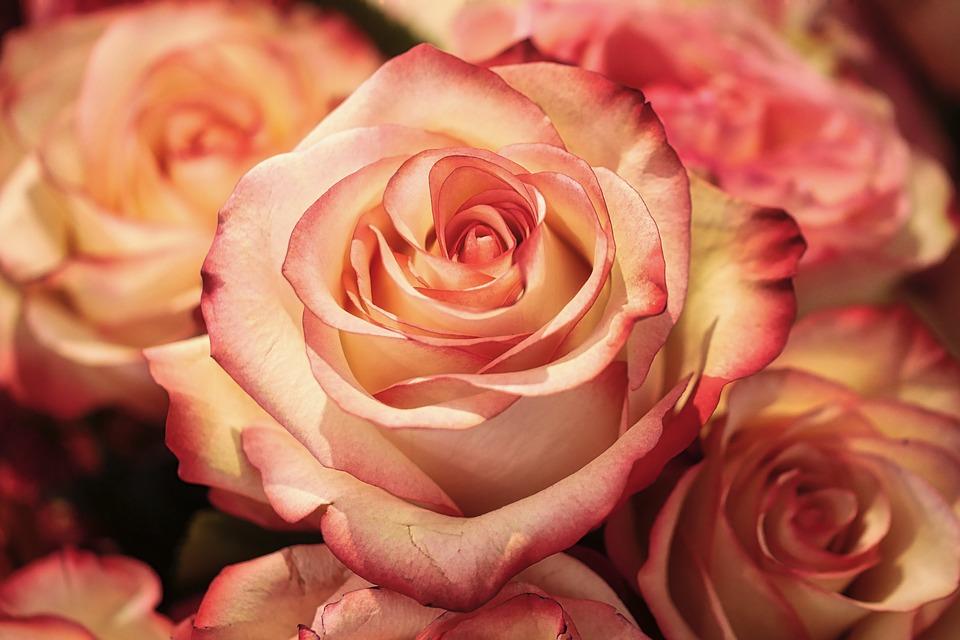 Как правильно дарить розы женщинам