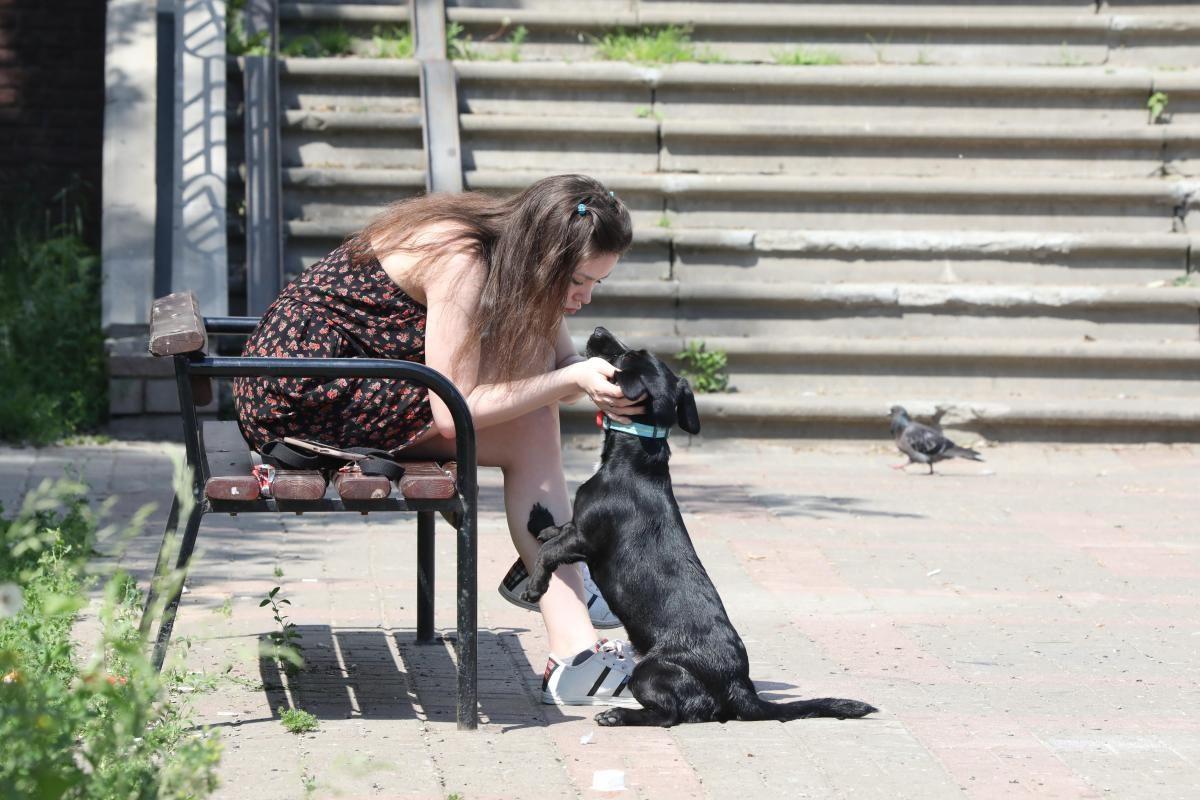 В нижегородском парке «Швейцария» временно запретили выгул собак