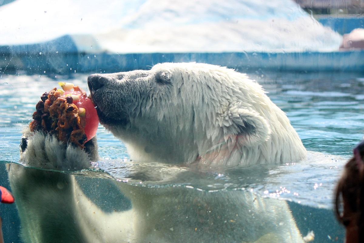 Из-за аномальной жары животным из зоопарка «Лимпопо» выдают фруктовый лед