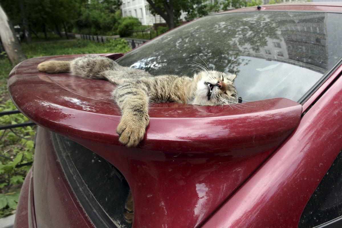 Аномальная жара ждет нижегородцев в ближайшие дни