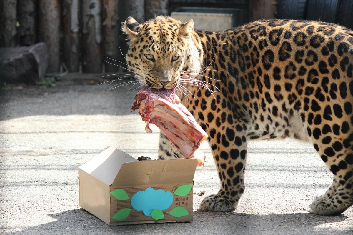 Зоопарк Лимпопо леопард