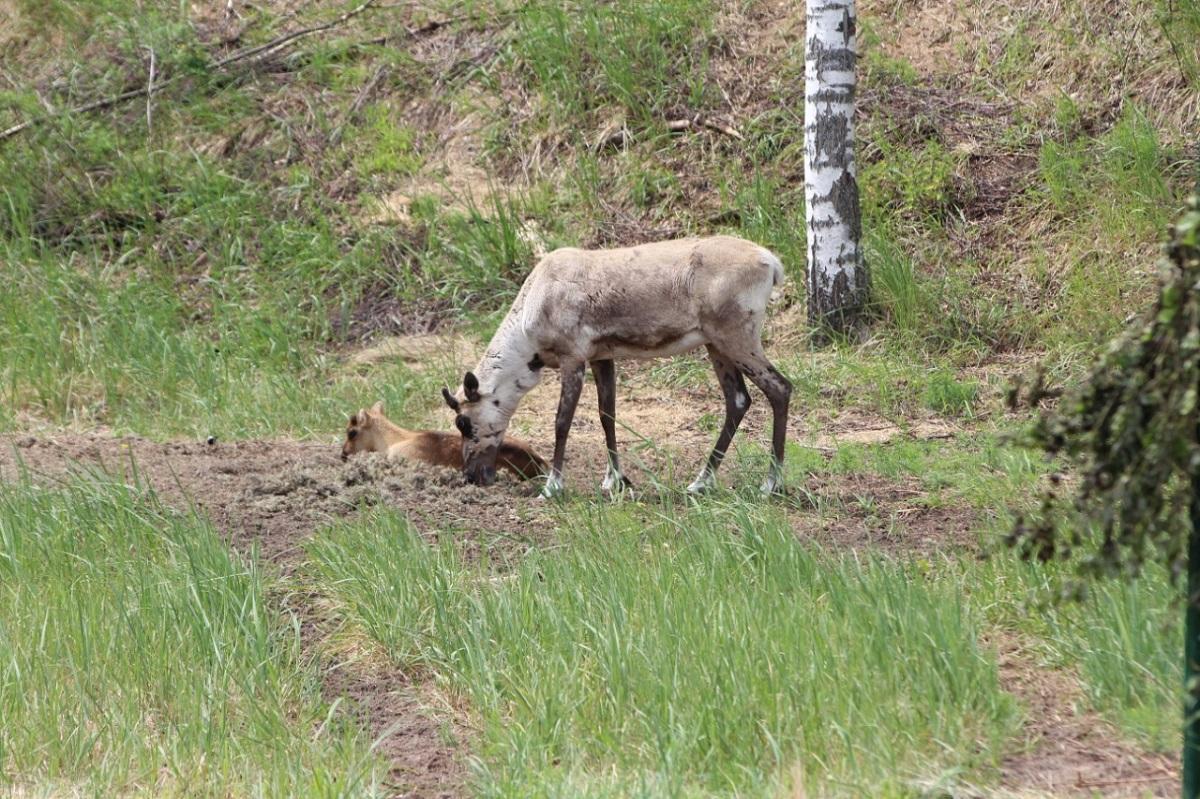 ВНижегородской области увеличилась численность диких животных
