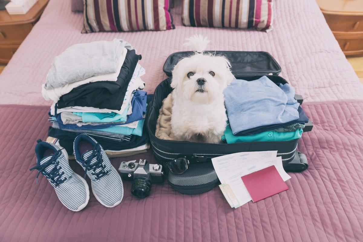 Хвост сдал – хвост принял: куда пристроить домашних животных на время отпуска?