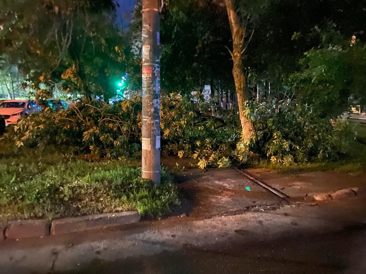Десятки поваленных деревьев в Нижнем Новгороде: смотрим последствия непогоды