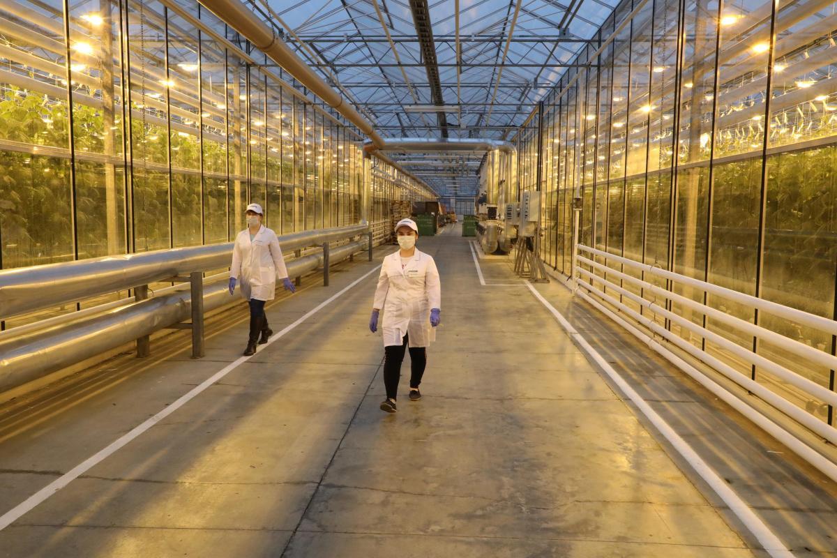 Тепличный комплекс для круглогодичного выращивания овощей откроется на Бору