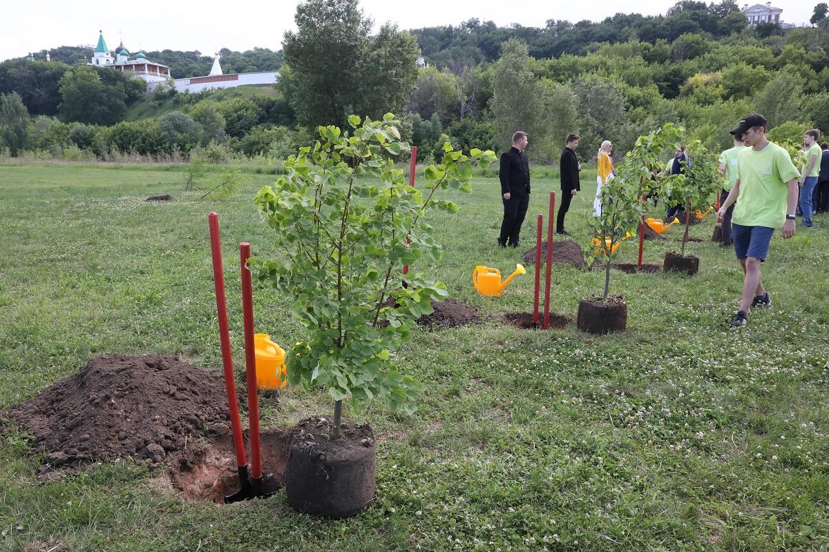 В Нижнем Новгороде высадят 5000 деревьев до конца 2021 года