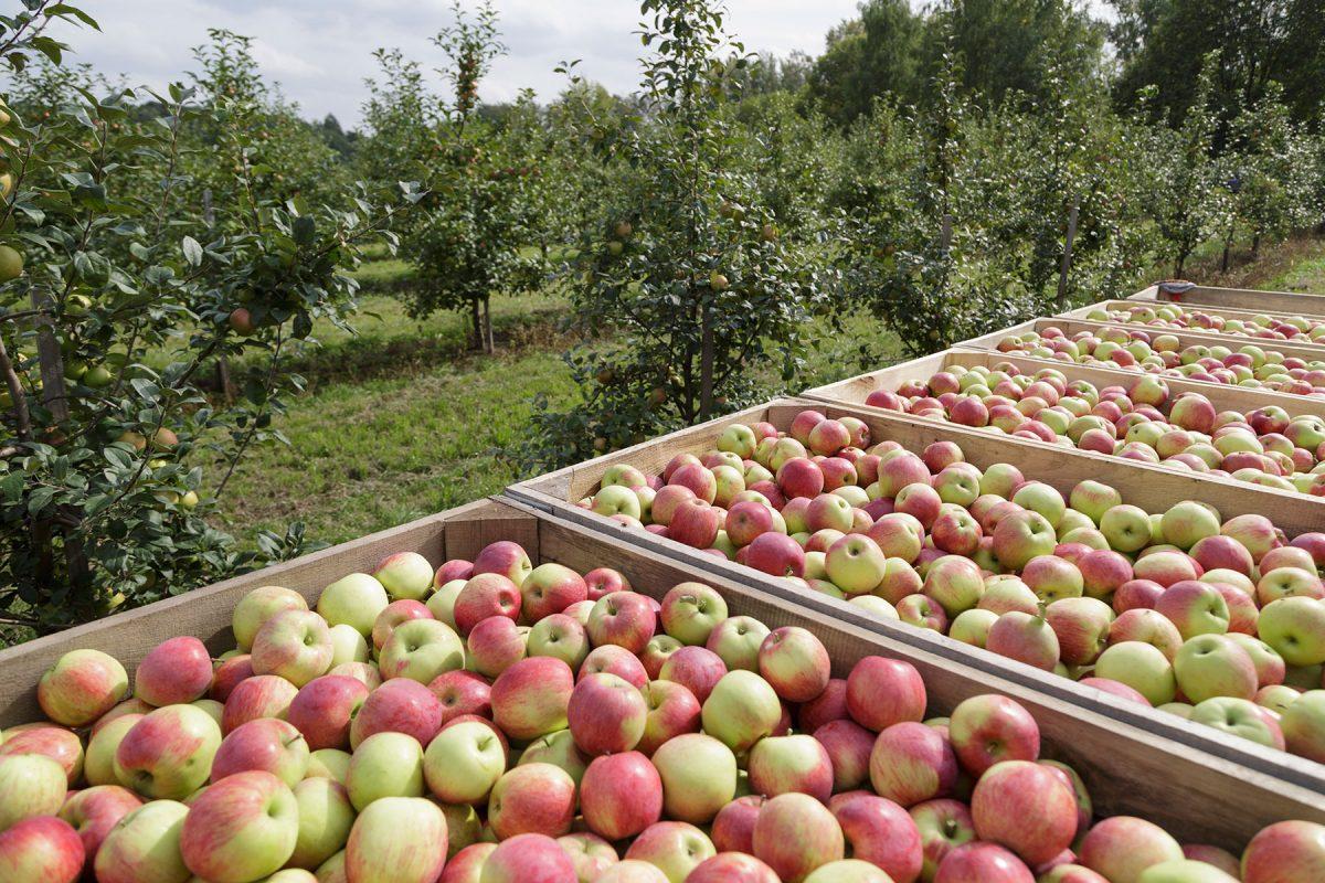 Нижегородским аграриям в2021 году предоставят 23,5 млн рублей субсидий наразвитие садоводства