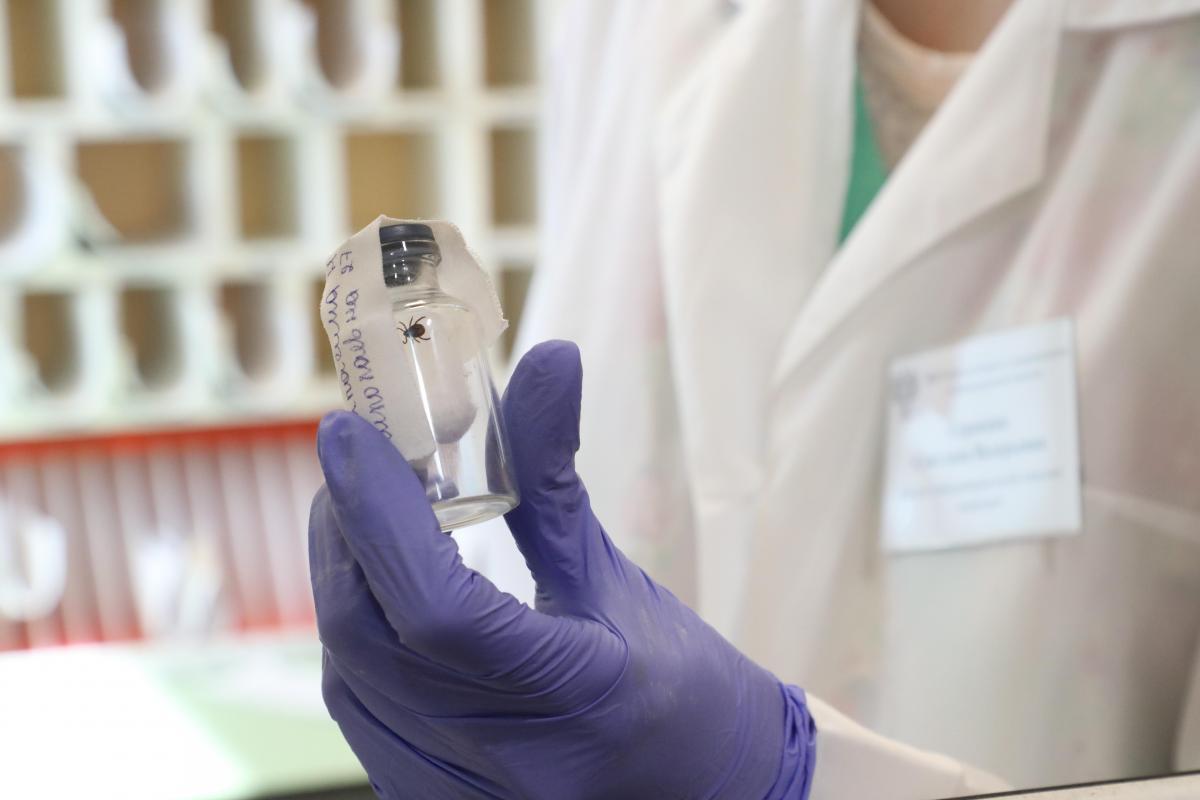 Более 7700 нижегородцев обращались в больницы с жалобами на укусы клещей