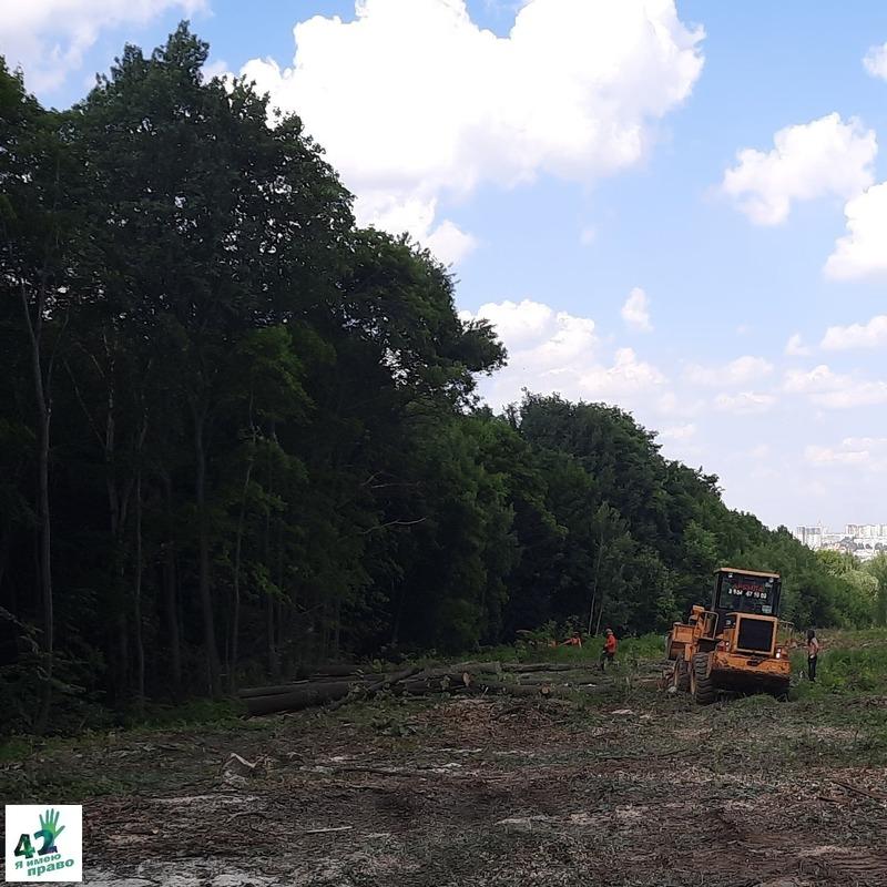 Губернатор Глеб Никитин назвал законной вырубку леса у Щелоковского хутора в Нижнем Новгороде