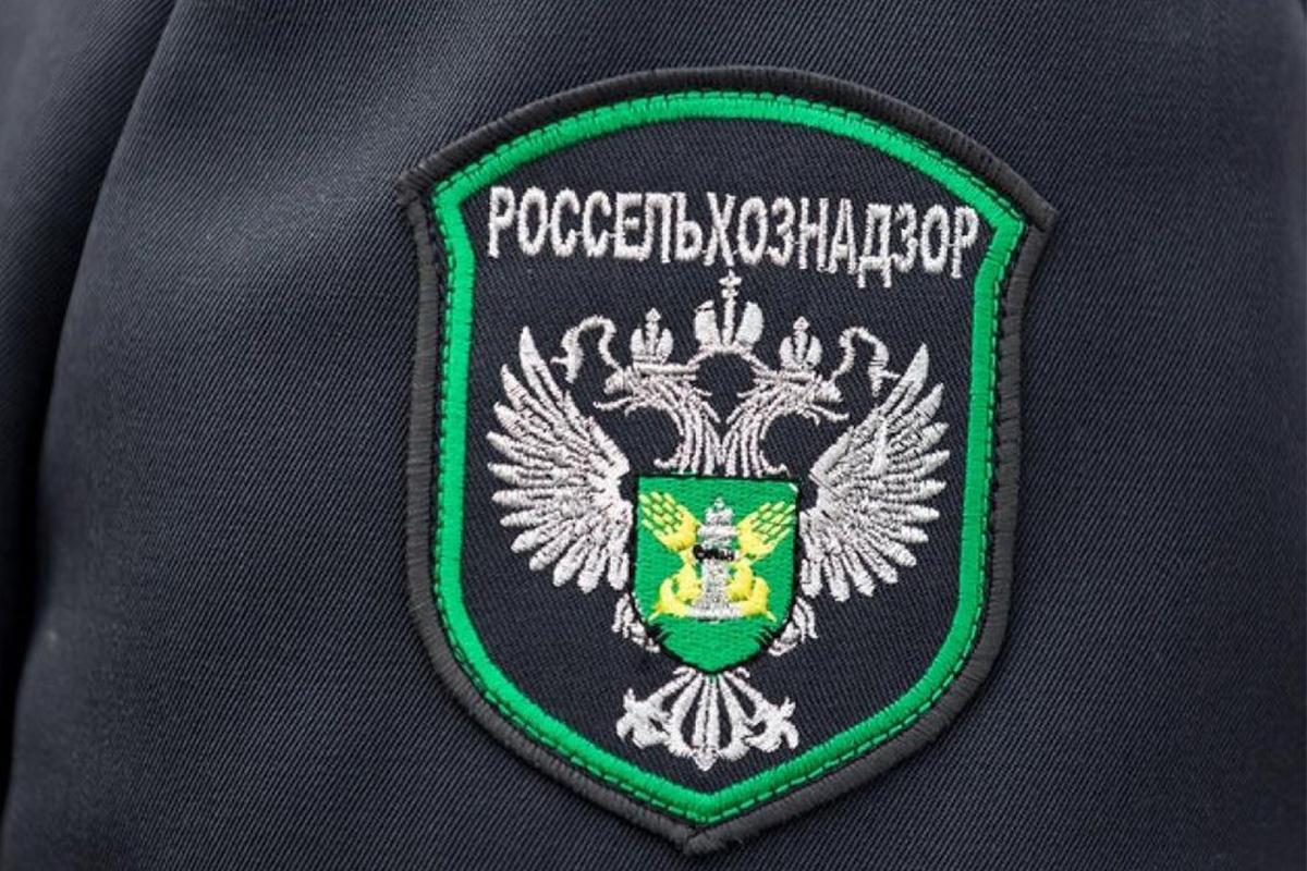 Партию санкционных сыров уничтожили в Нижнем Новгороде