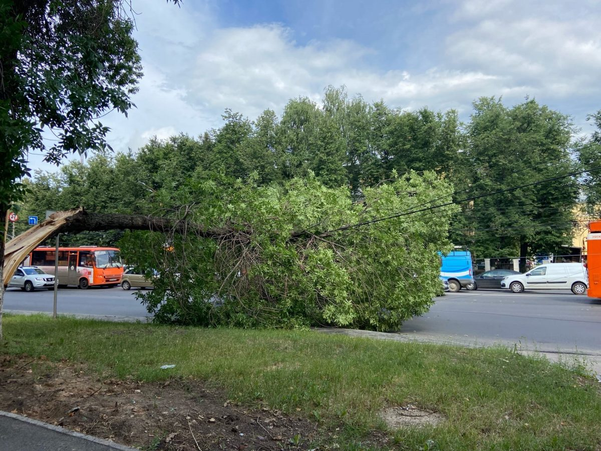 Дерево упало на провода на проспекте Гагарина