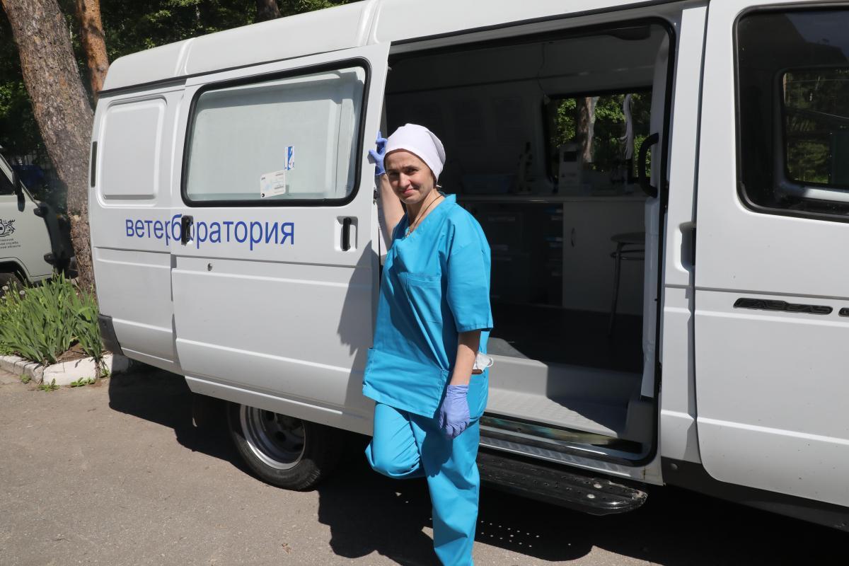 Очаг АЧС купирован вСергачском районе