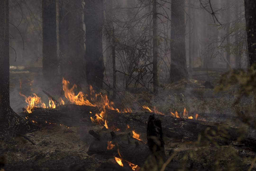 «Почти на всем пути тлели остатки деревьев»: нижегородский фотограф проехал по территории лесных пожаров