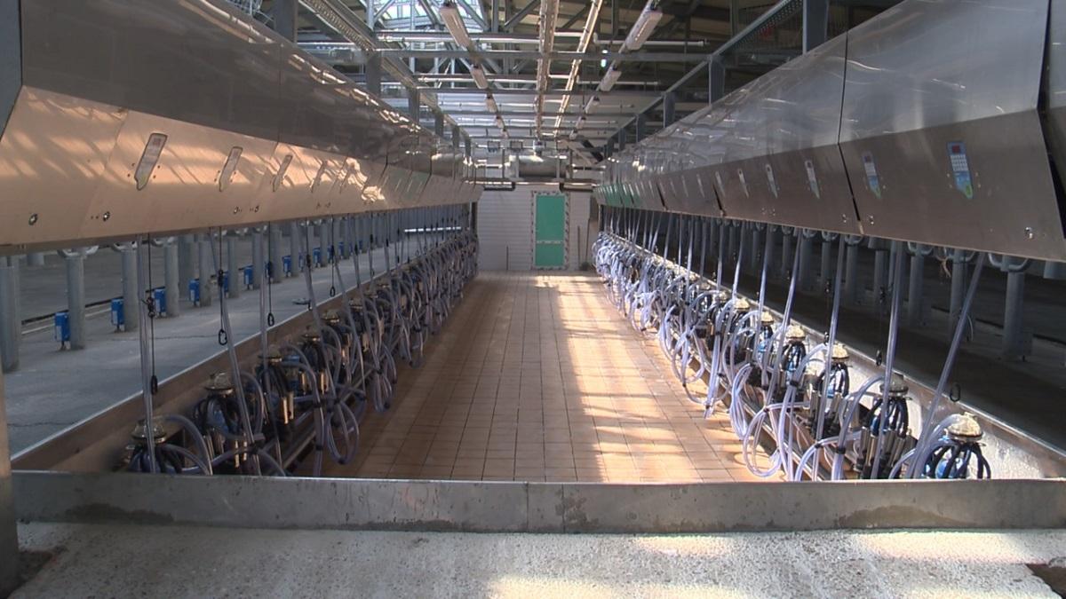 Крупнейший в2021 году молочный комплекс построен вАрдатовском районе Нижегородской области