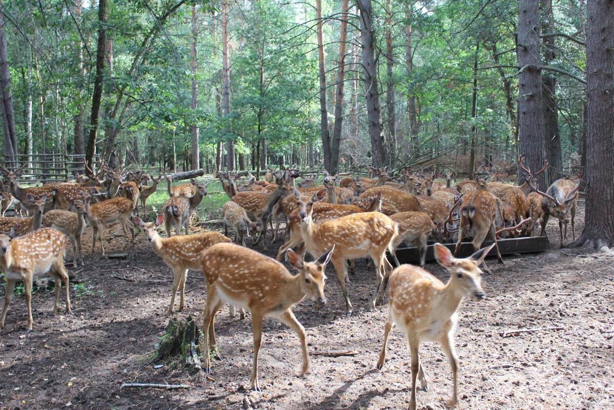 Экологическая тропа создана вГородецком районе