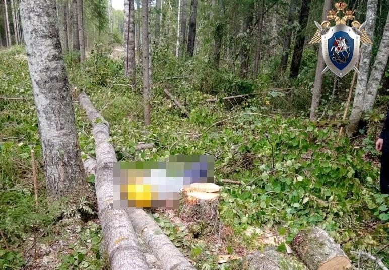 Следователи заинтересовались гибелью работника при валке леса в Шахунском районе