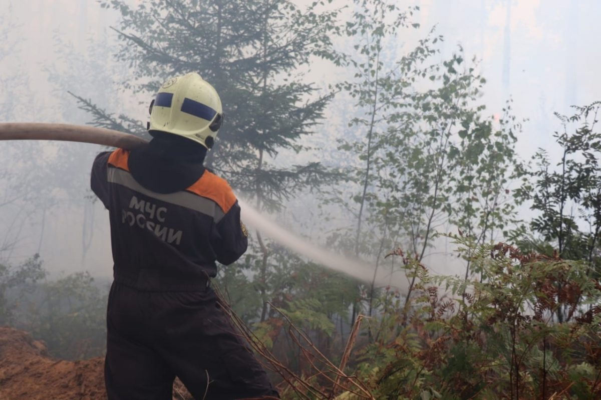 На борьбу с лесными пожарами регионам дополнительно выделят 24 млрд рублей