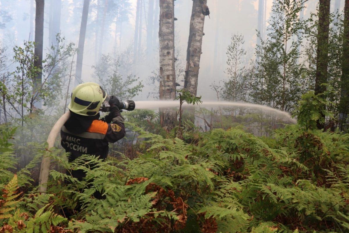 Жаркая погода и порывистый ветер усложняют работу: около тысячи нижегородских спасателей борются с огнем в Мордовском заповеднике