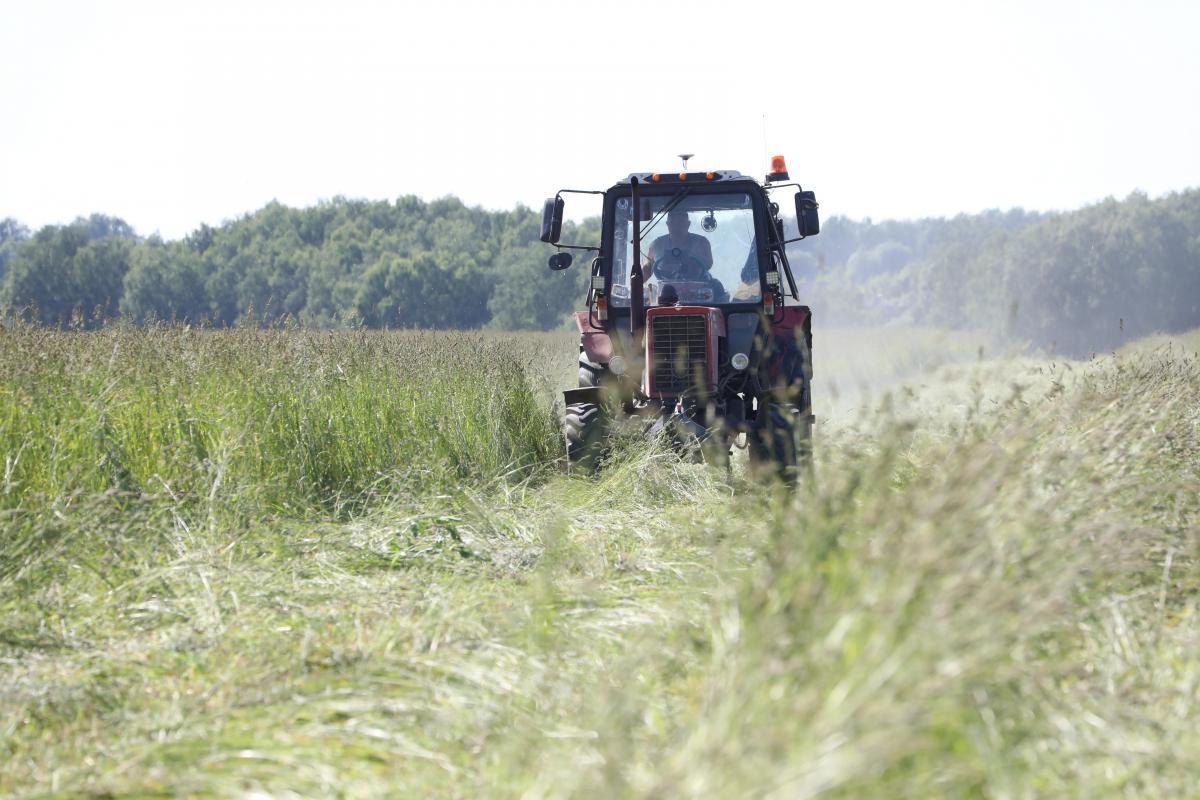 Более 60% личных подсобных хозяйств обследовано вНижегородской области врамках микропереписи