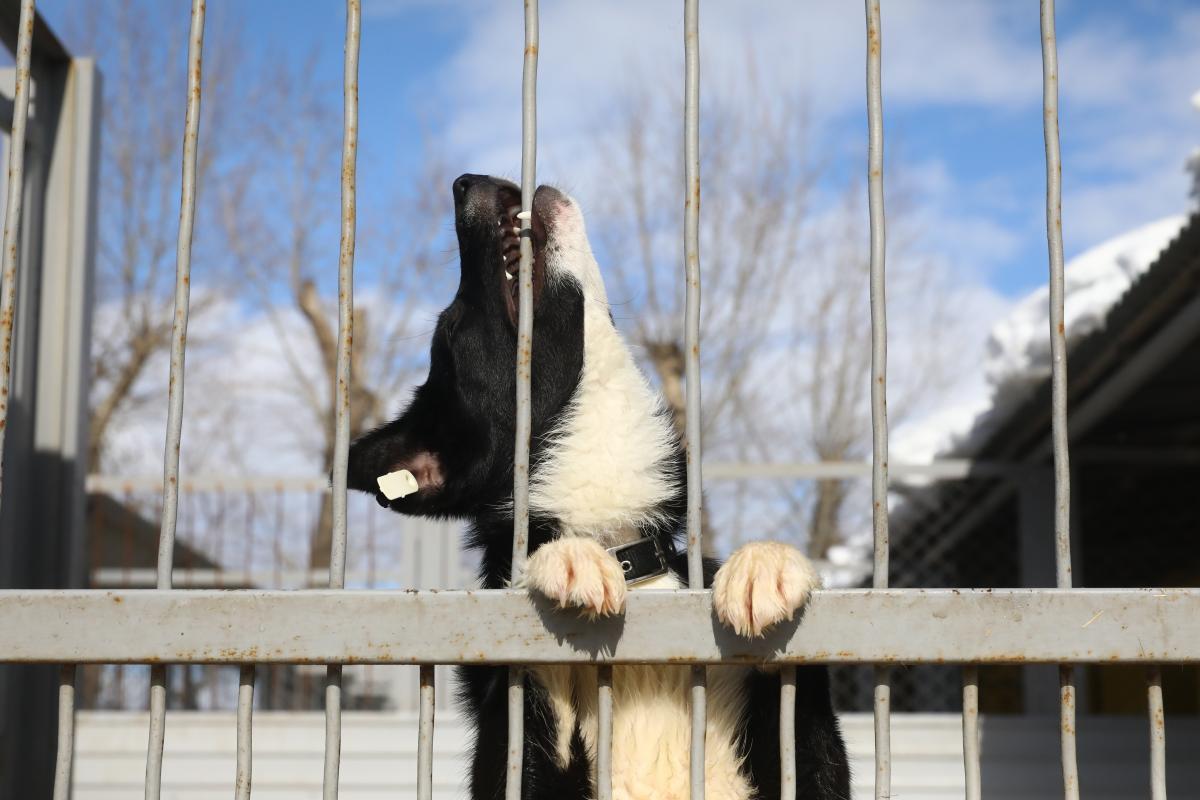 Собаки Сострадание бездомные животные