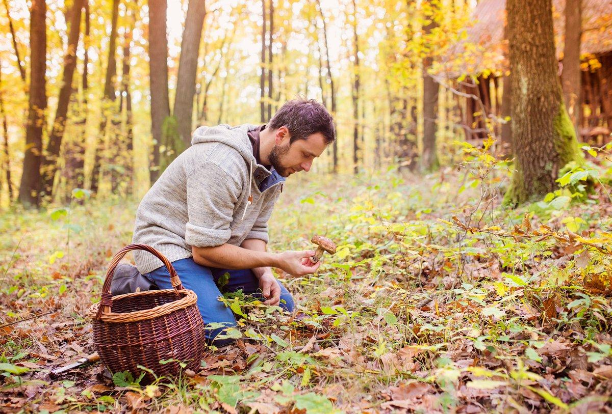 Полезный белковый продукт или вредная тяжёлая пища: мифы и правда о лесных грибах