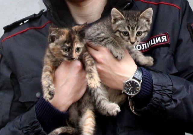 Нижегородские полицейские ищут дом для котят