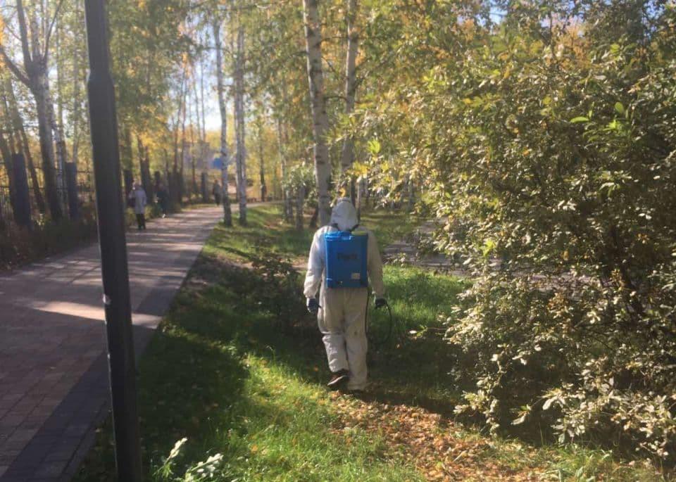 Пять нижегородских парков обработали от грызунов и клещей