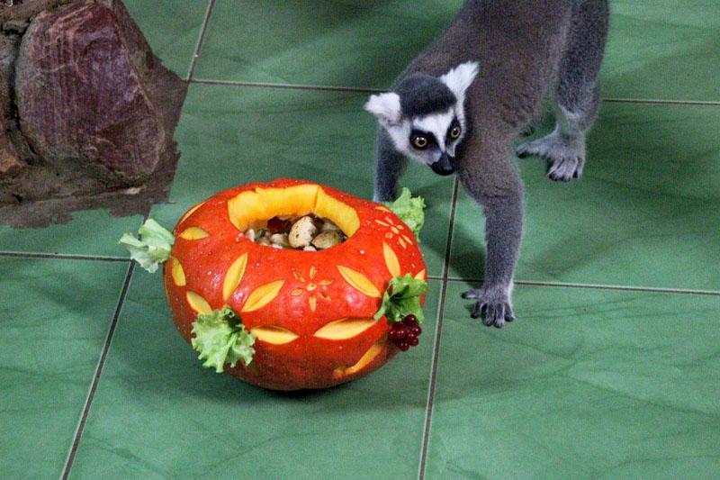 Самую большую тыкву выберут в нижегородском зоопарке «Лимпопо»