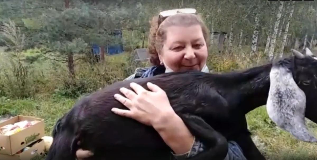 Видео дня: полицейские вернули жительнице Сокольского района украденную козу