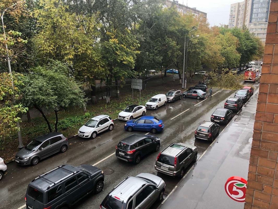 Сильная пробка образовалась на улице Горького из-за упавшего дерева