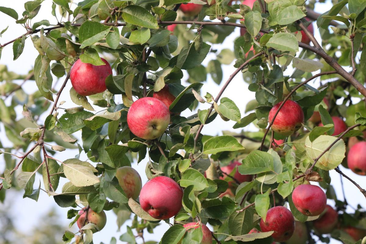 Правила осени: завершаем садово-огородный сезон грамотно
