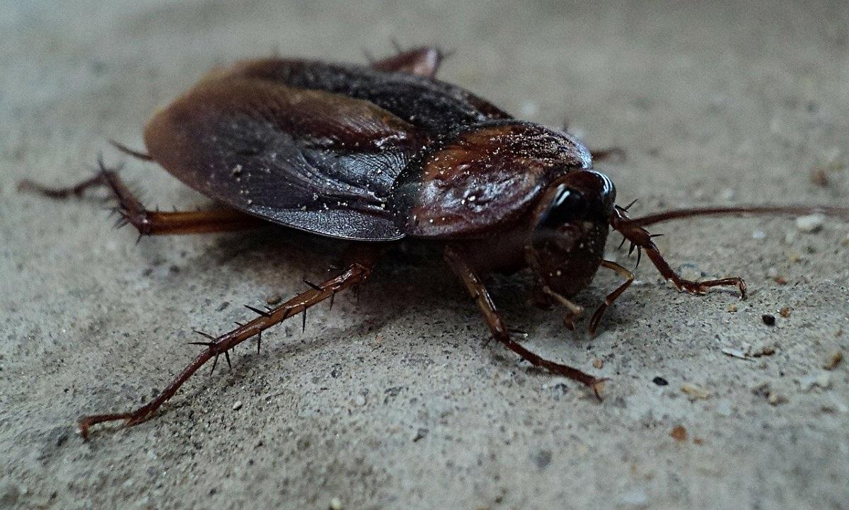 Нижегородцы заметили полчища тараканов в Канавинском районе