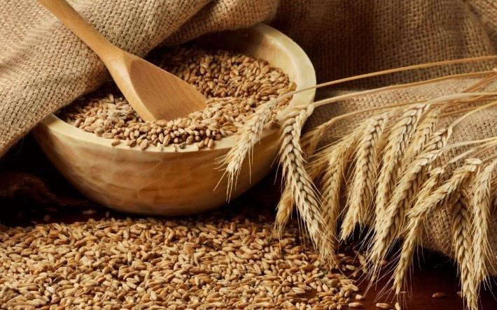Опасную кормовую пшеницу нашли в Нижегородской области