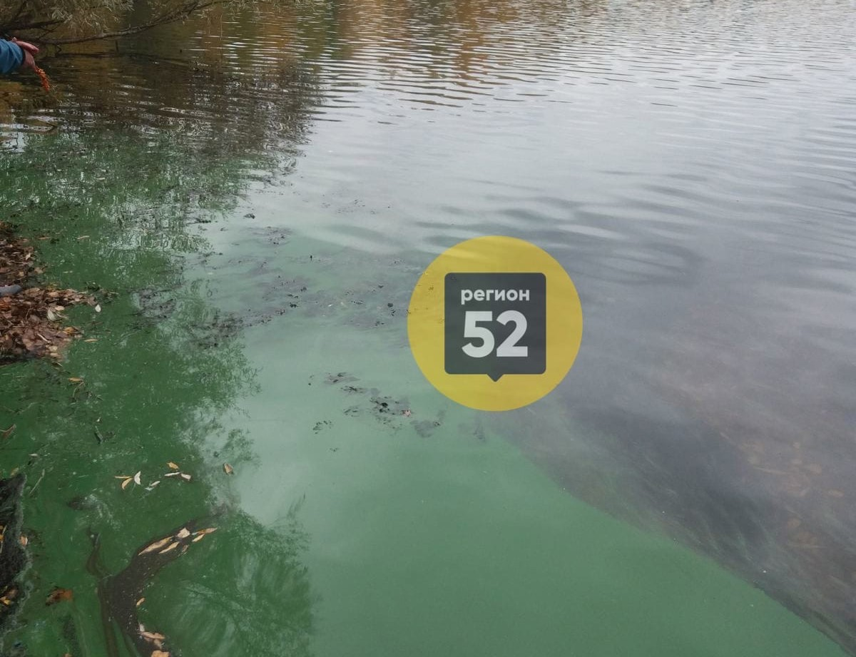 Озеро под Дзержинском окрасилось в кислотно-зеленый цвет