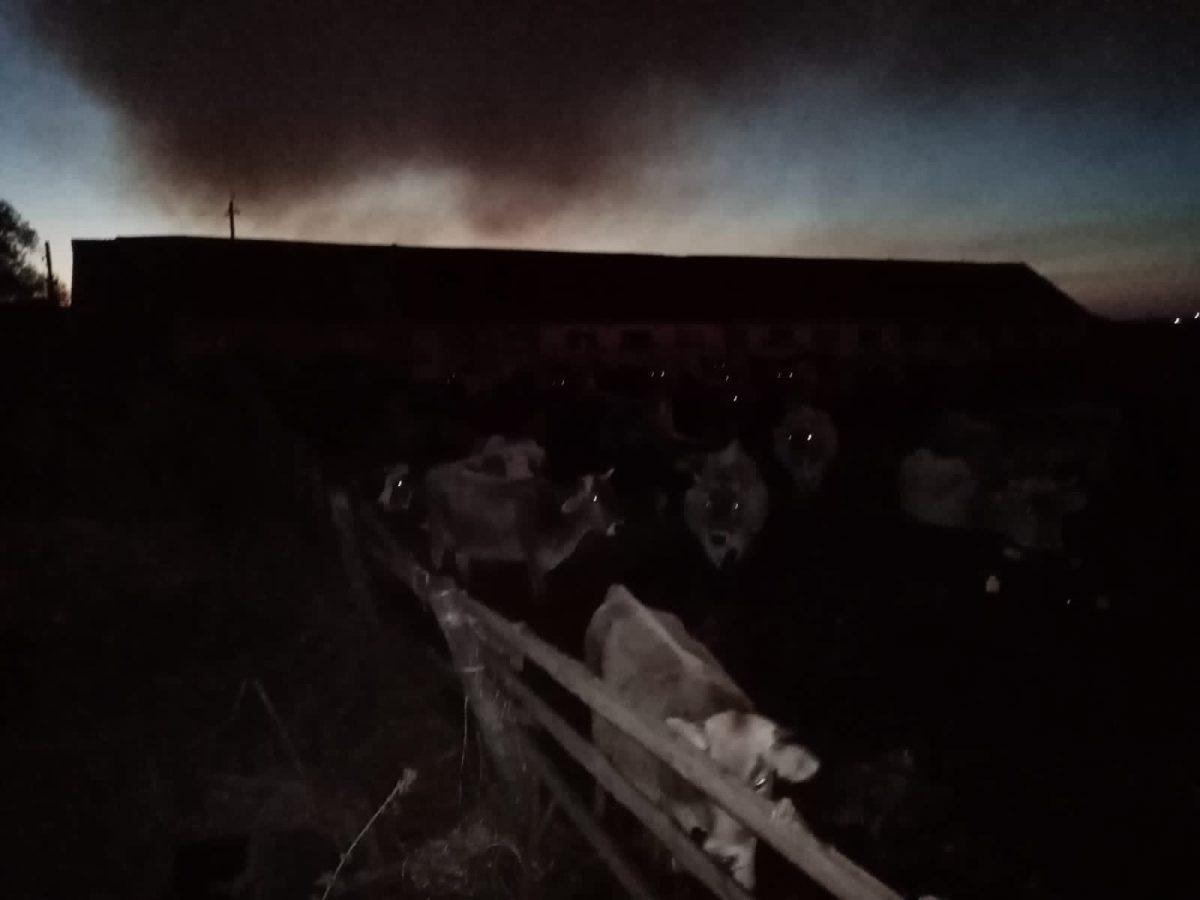 Скот чуть не сгорел из-за пожара в крестьянско-фермерском хозяйстве в Вадском районе