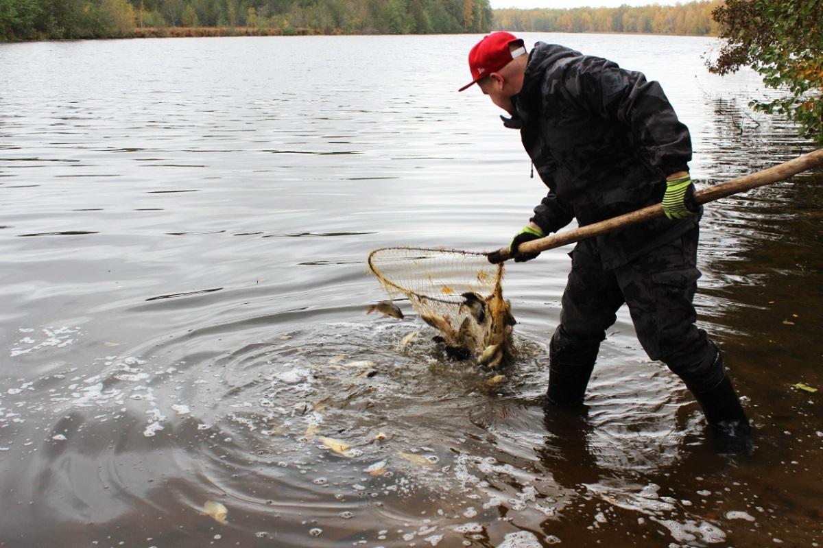 Тонна карпа выпущена возеро Юхро в Нижегородской области